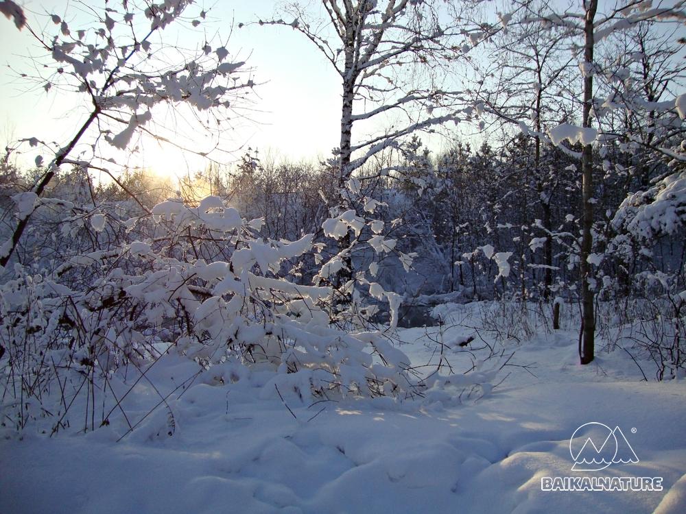 Закат в зимнем лесу.